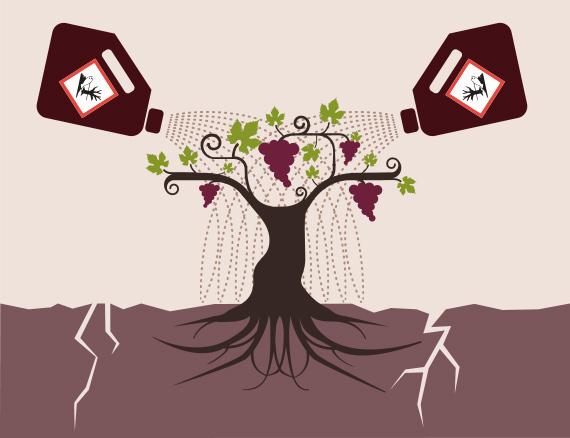 Culture de la vigne vin conventionnel-Vinibee
