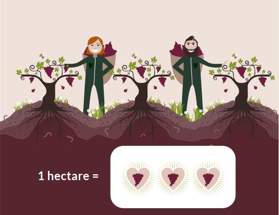 Culture de la vigne vin bio-Vinibee