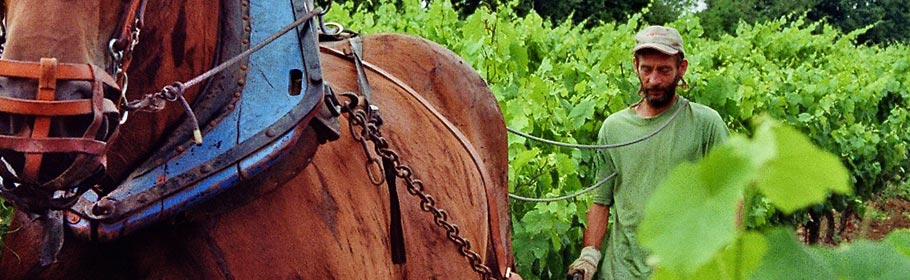 vins bio biodynamiques et naturels-Vinibee