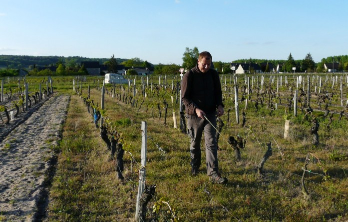 Domaine Laurent Herlin-Vinibee