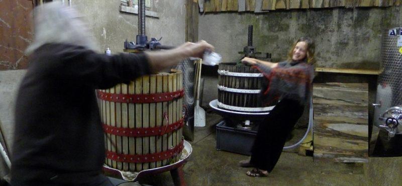 La vinification au domaine Clé de Sol-Vinibee