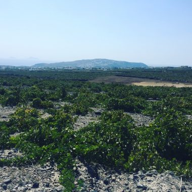 Domaine Hatzidakis - vue vignoble août 2017 - Vinibee