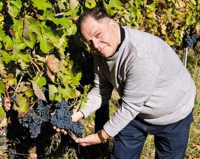 Salvatore Molettieri - Vinibee