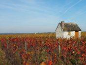 Domaine Patrice Colin - Côteaux du Vendômois- Vinibee - Caisse de 6 qui Cartonne en Octobre
