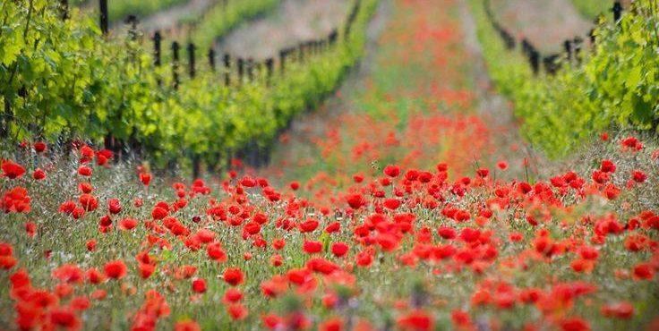 Foire aux vins - vins bio - vins naturels - Vinibee