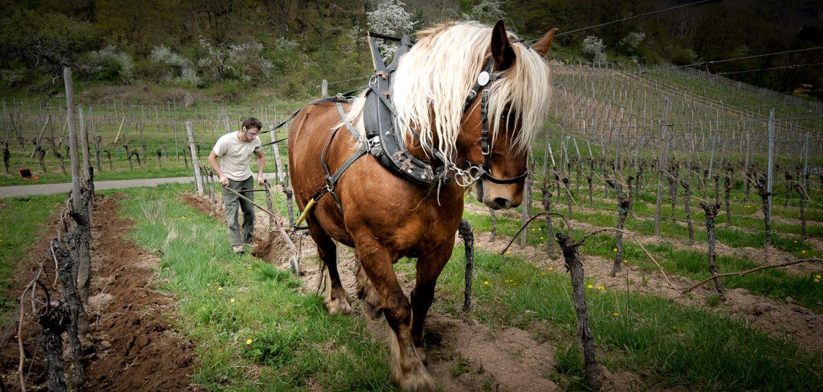 Domaine Kreydenweiss - Antoine et Marc Kreydenweiss - Alsace - vin biodynamique - coffret vins A-Traction