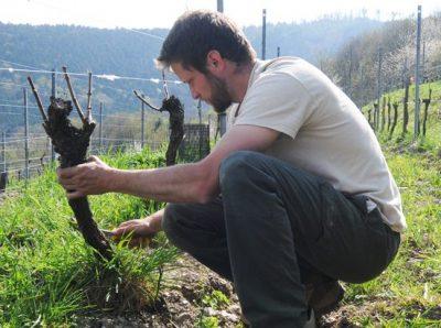 Domaine Kreydenweiss - Antoine et Marc Kreydenweiss - Alsace - vin biodynamique - Vinibee