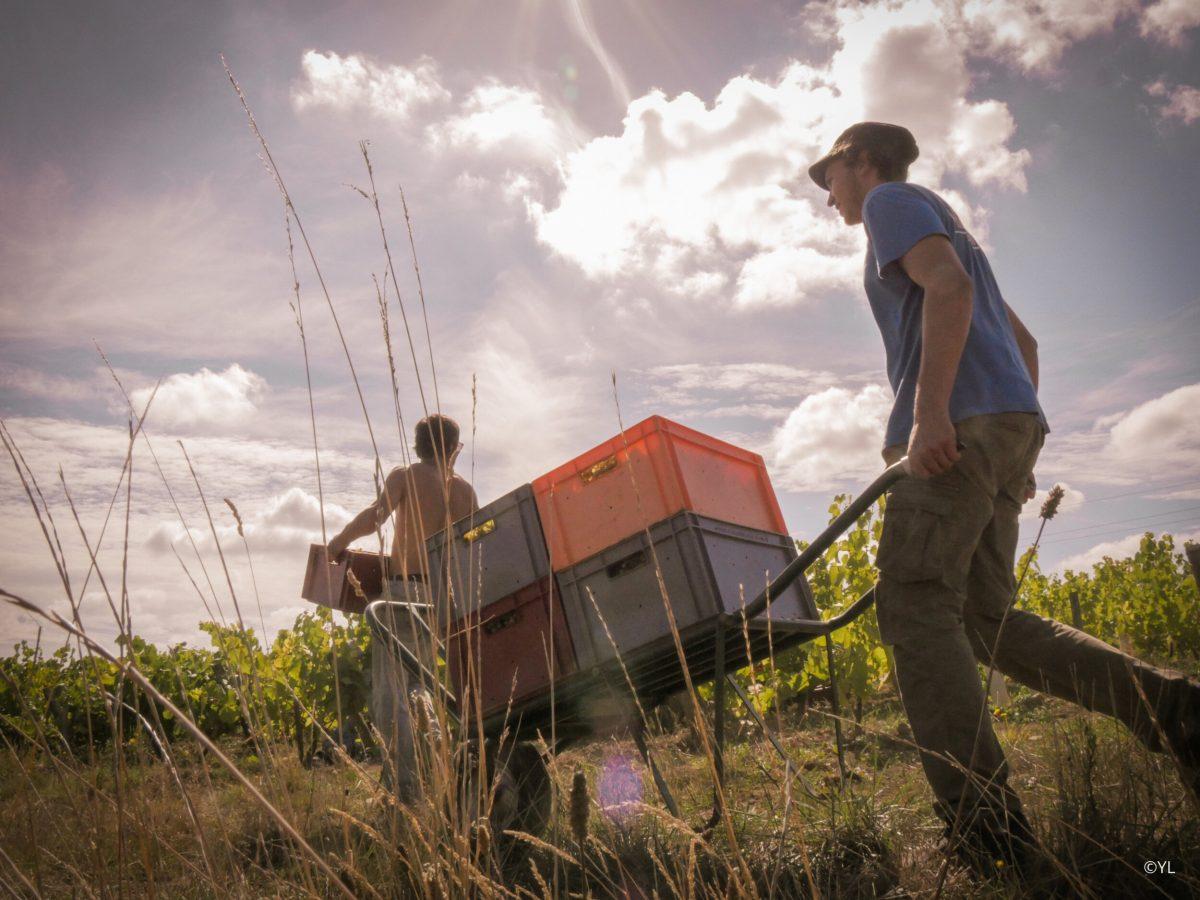 Domaine Complementerre - Marion Pescheux et Manu Landron - vin naturel - vinibee