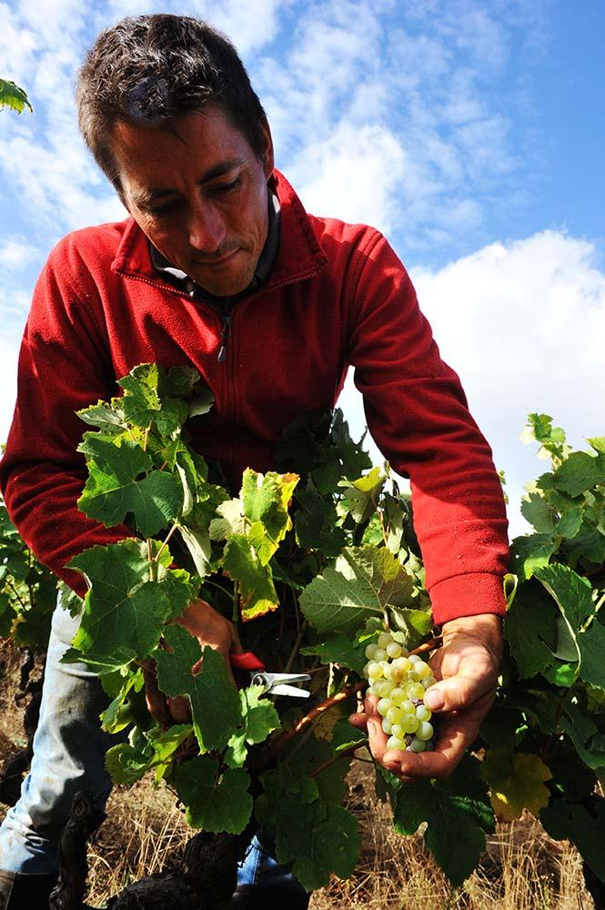 Nicolas Suteau - Bretagne - vin naturel - vinibee