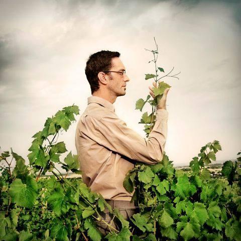 Domaine Philippe Gilbert - Menetou-Salon - vin biodynamique - vinibee